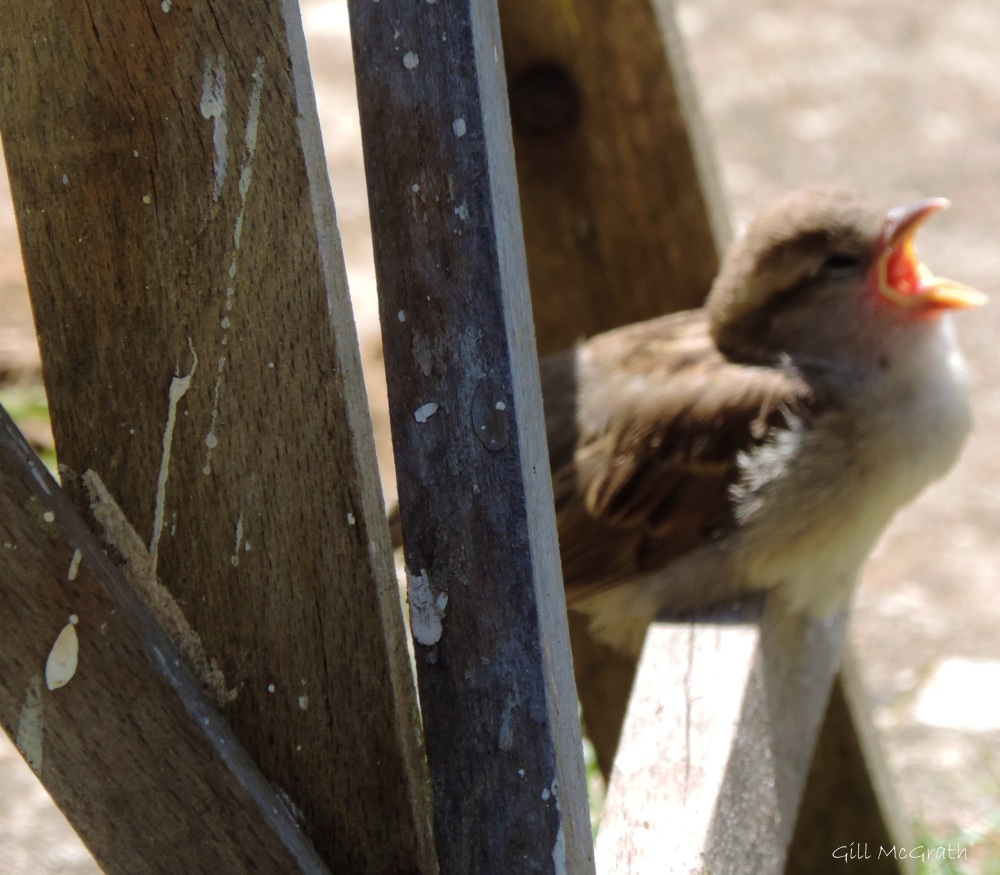 2015 06 18 7 baby bird  today  jpg sig