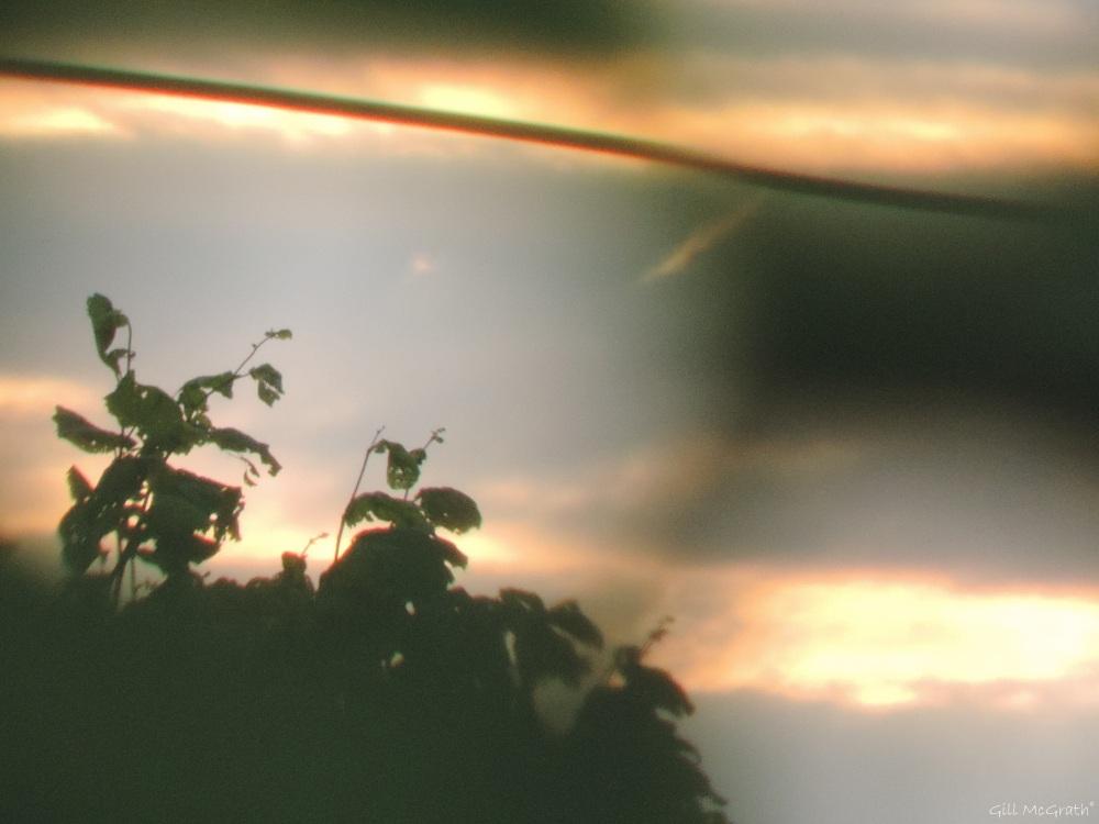 2015 06 23 air aria DSCN2751 jpg sig