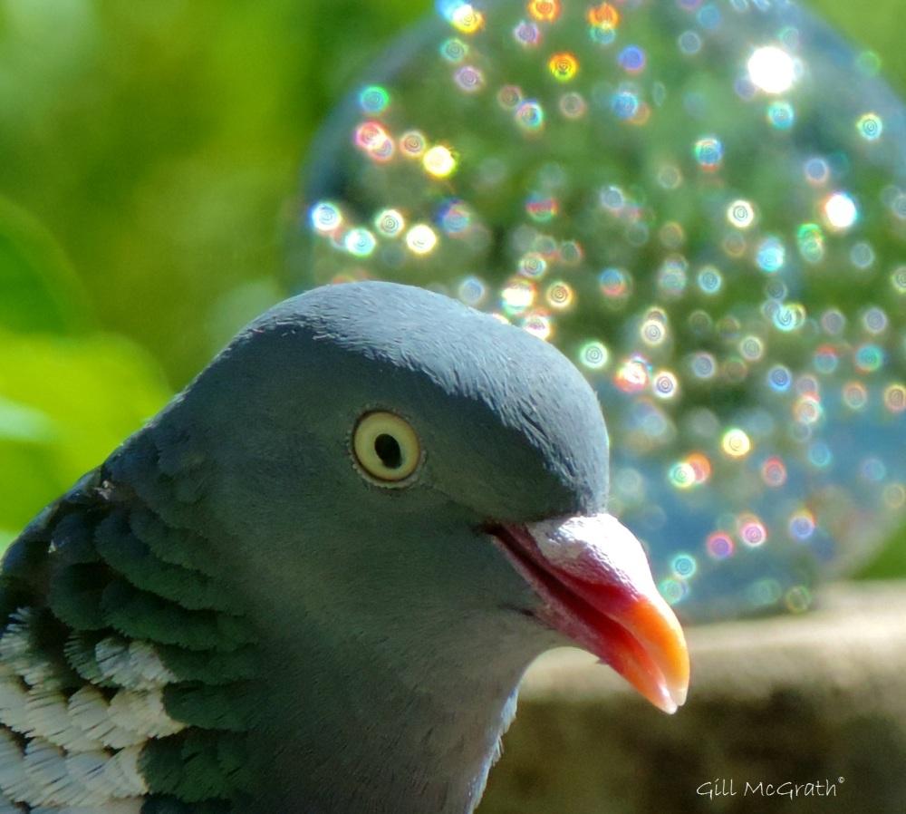 2015 06 30 glow bird DSCN4189 jpg sig