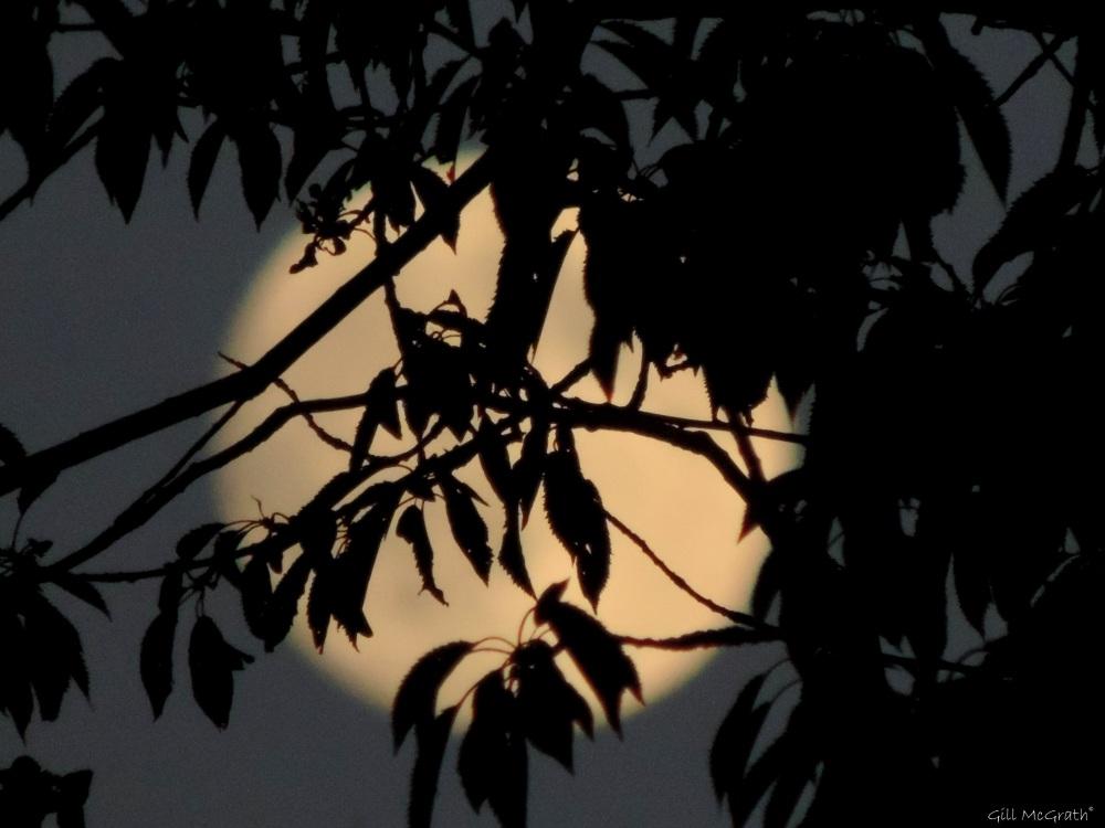2015 06 30 moon magic  DSCN4279 jpg sig