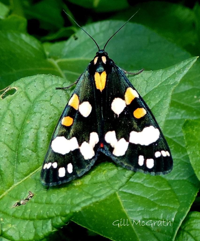 4 2015 06 29 butterfly DSCN4003 jpg sig
