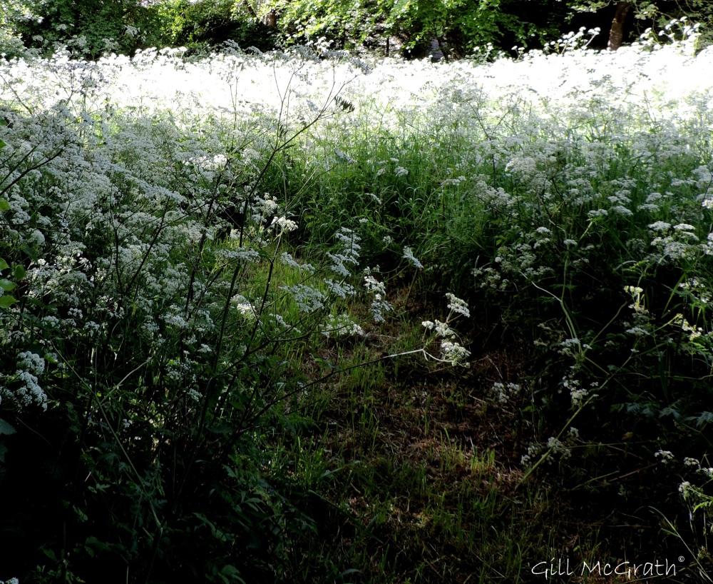 5 2015 06  05 visit to mabel's field  DSCN6747 jpg sig
