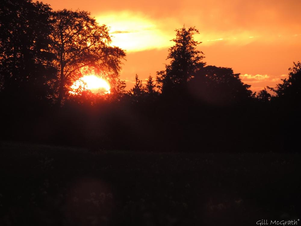 6 2015 06 04 916  sunset DSCN8312 jpg sig