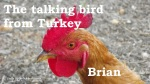 Brian 07 talking bird