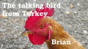 Brian 07 talking bird