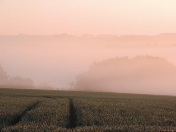 2015 07 03 522 pink mist this morning DSCN4556 jpg sig