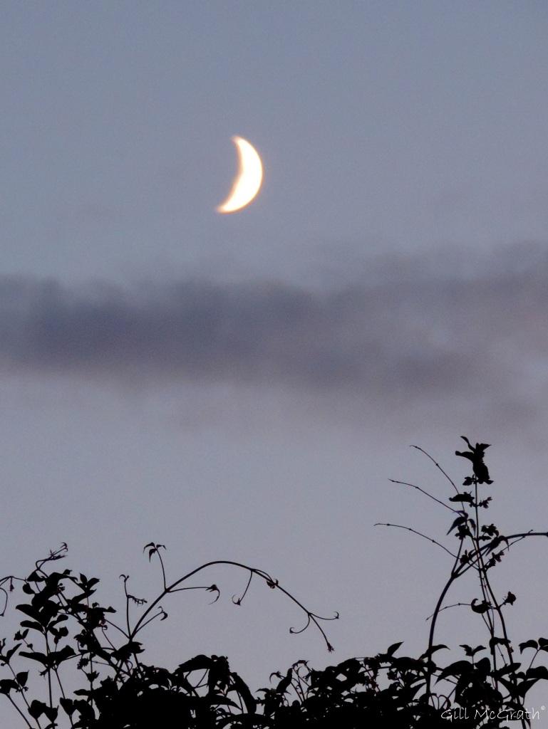 2015 07 21 moon DSCN6605 jpg sig