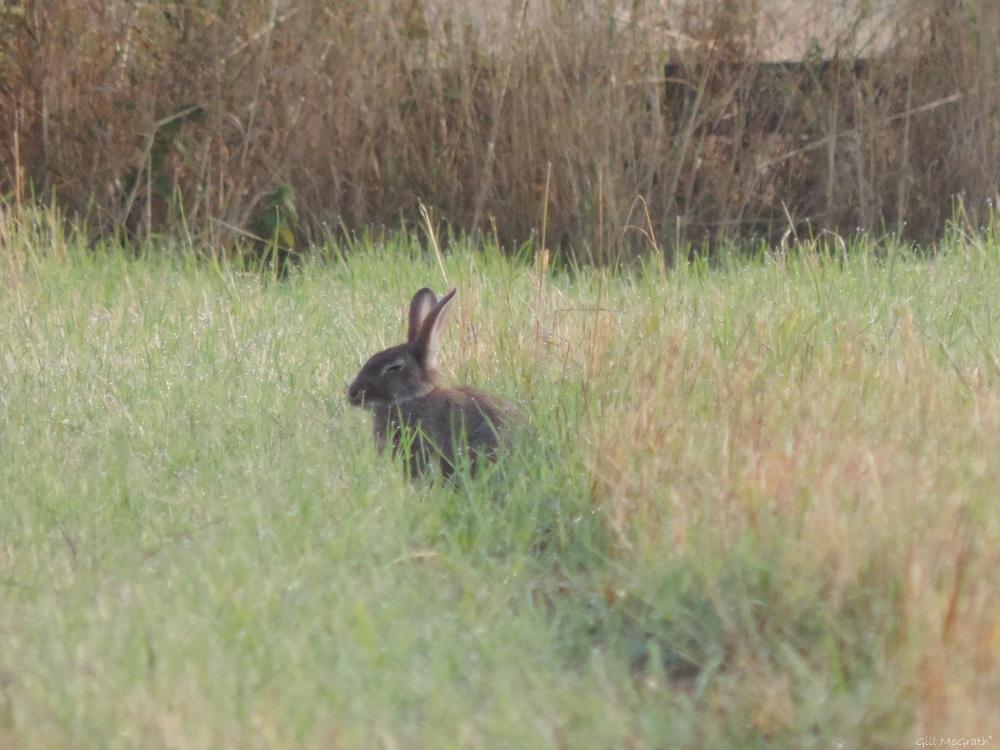 2015 08 19 bunny sleeps DSCN9231 jpg sig