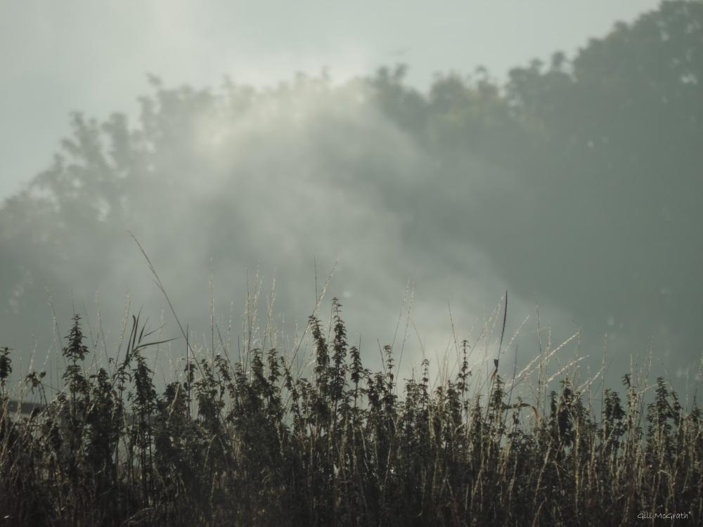 2015 08 19 mist DSCN9177.jpg peg