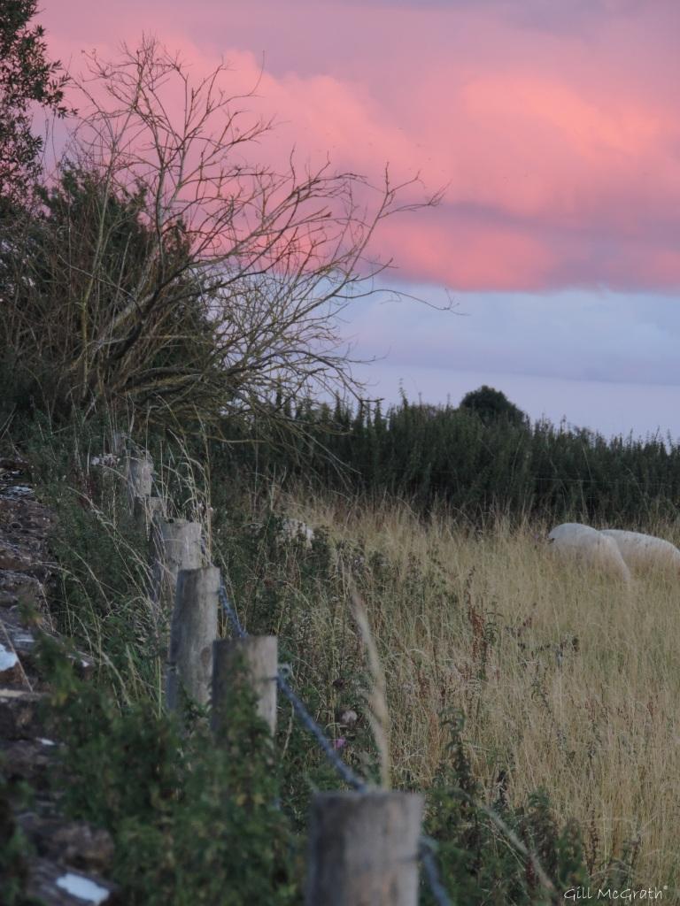 2015 08 23 sky sheep DSCN9584.jpg sig
