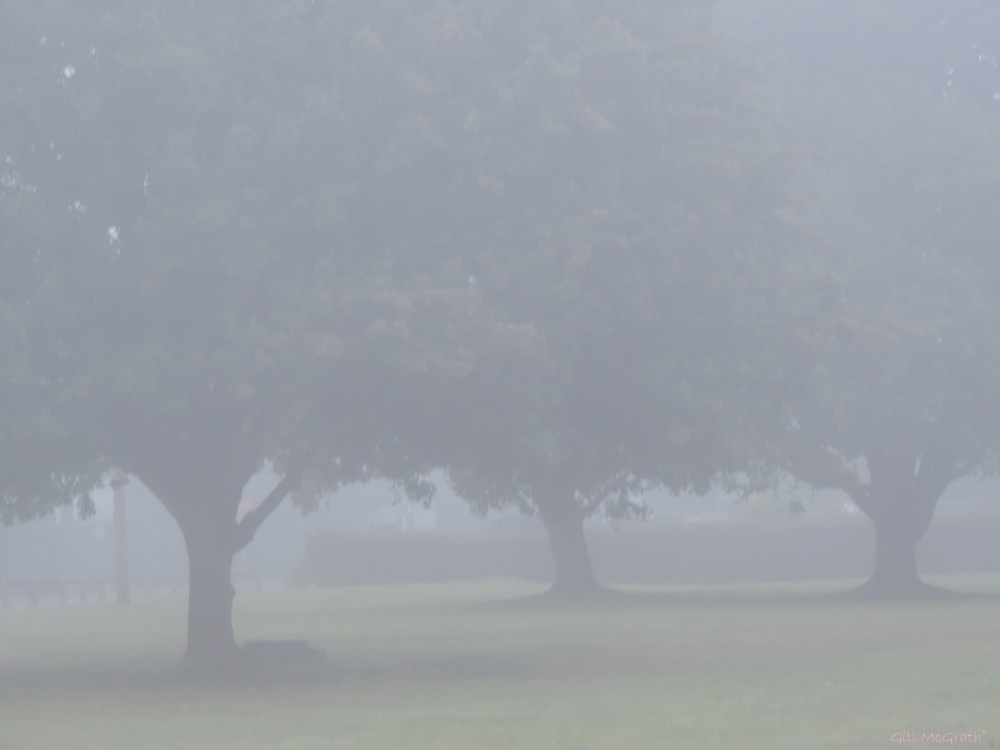 3 2015 08 02 feathery mist DSCN8011jpg sig