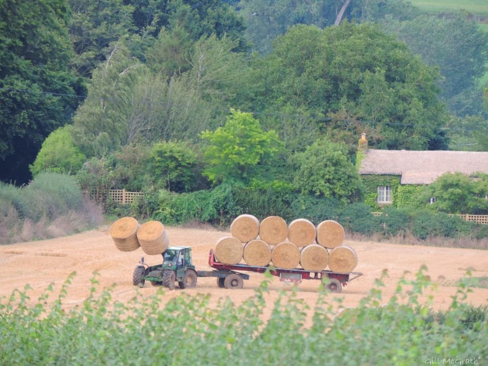 3 2015-08-30 harvest DSCN0085.jpg sig