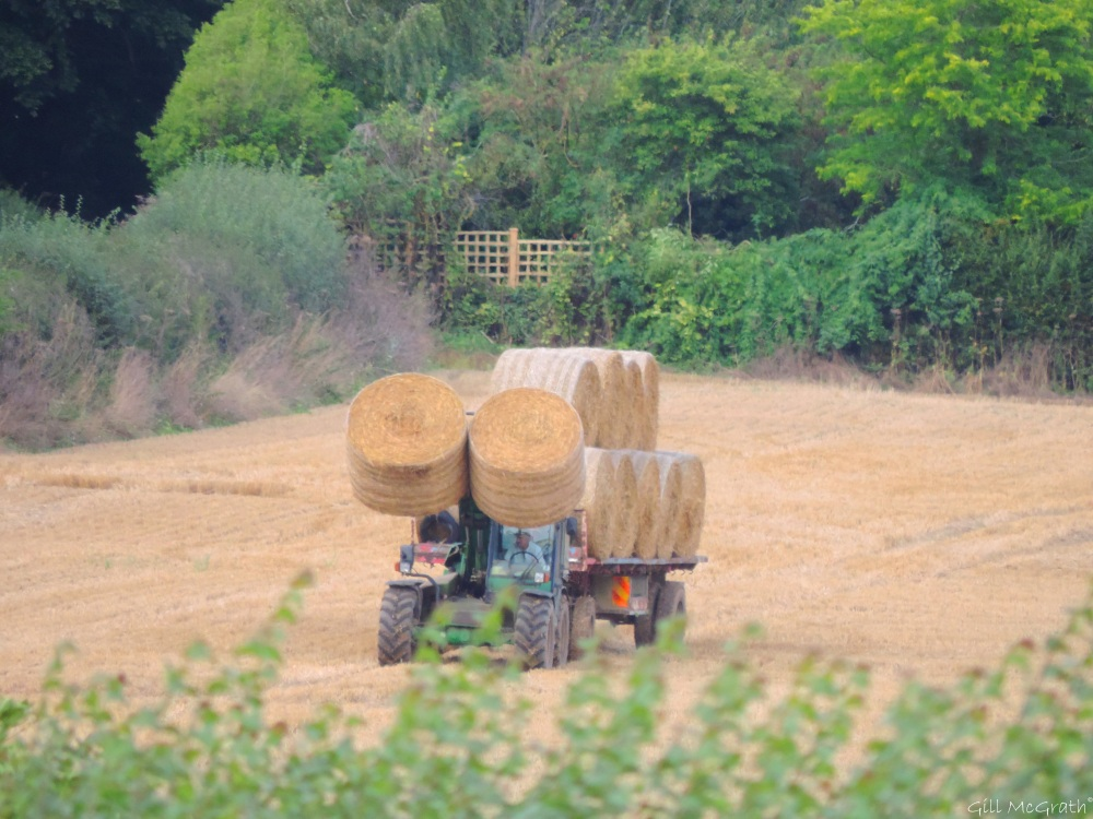 4 2015-08-30 harvest DSCN0086.jpg sig