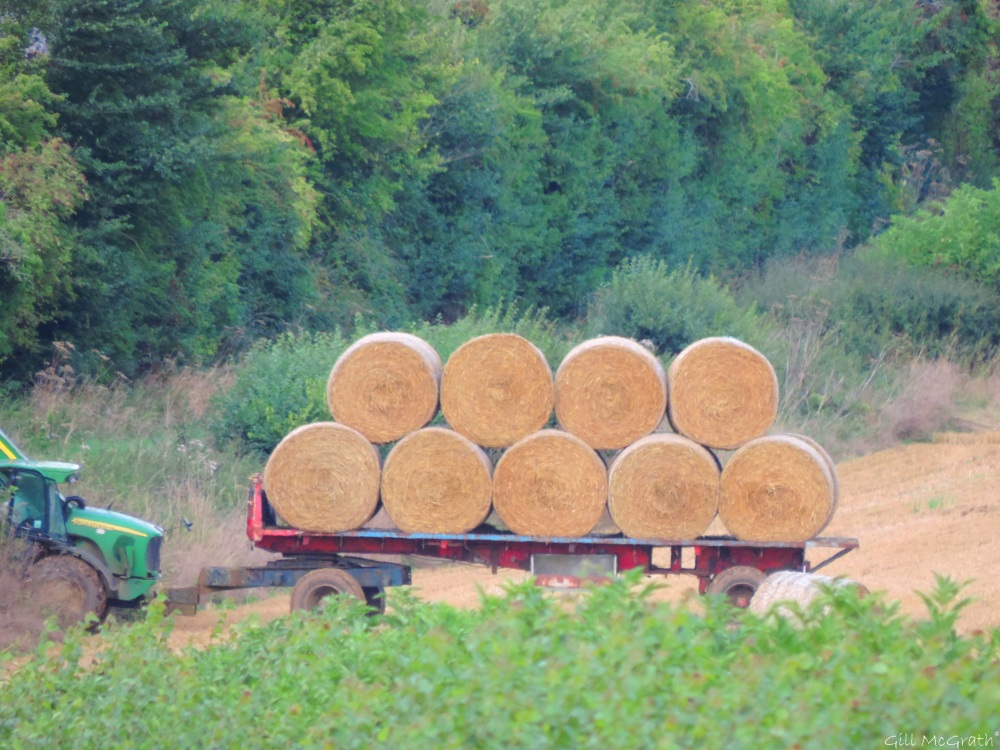 5 2015-08-30 harvest DSCN0089.jpg sig