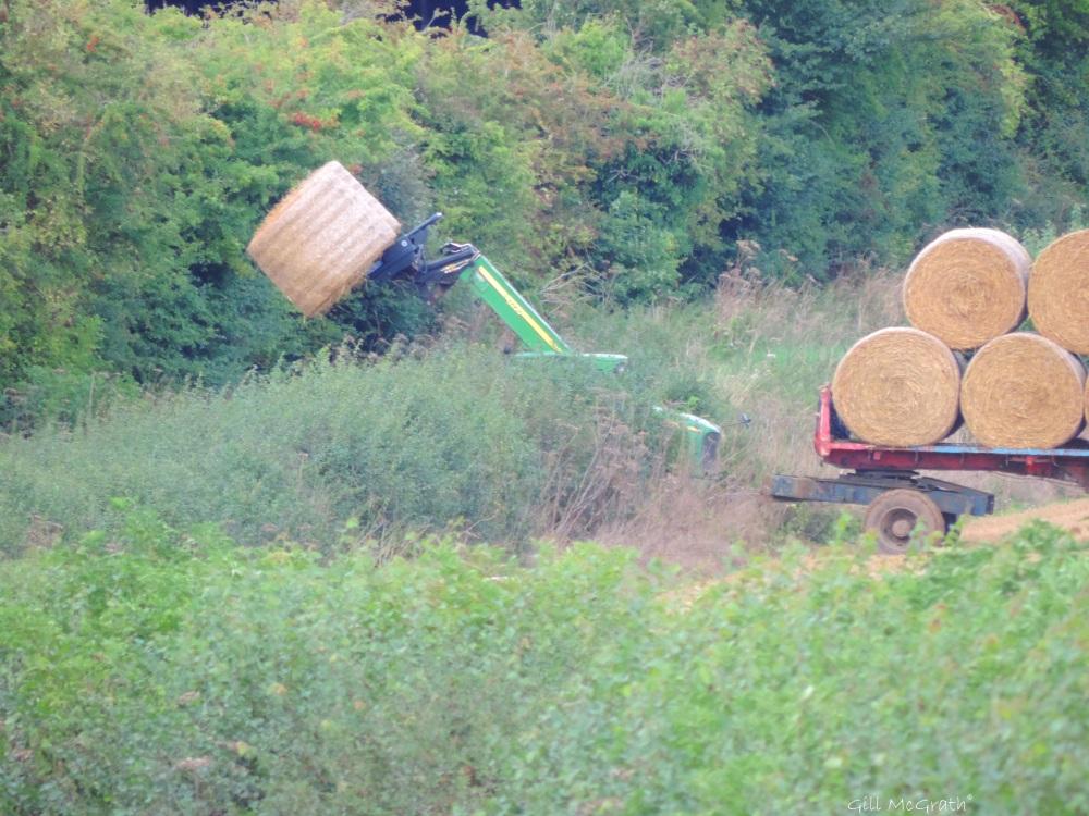 6 2015-08-30 harvest DSCN0090.jpg sig