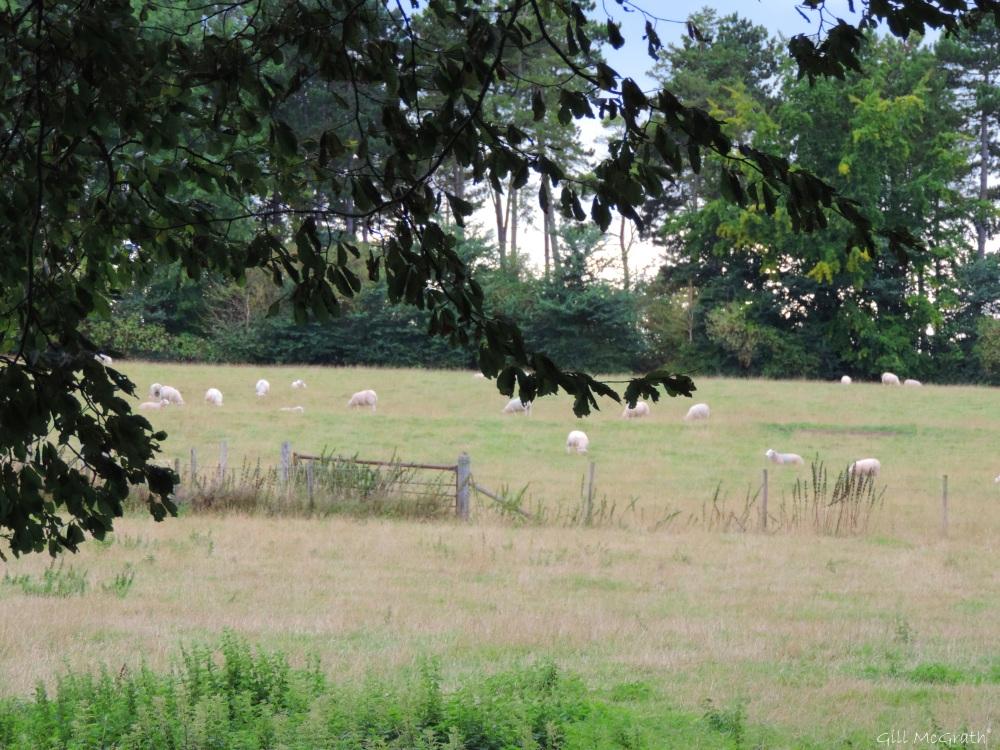 7 2015-08-30 harvest DSCN0103.jpg sig