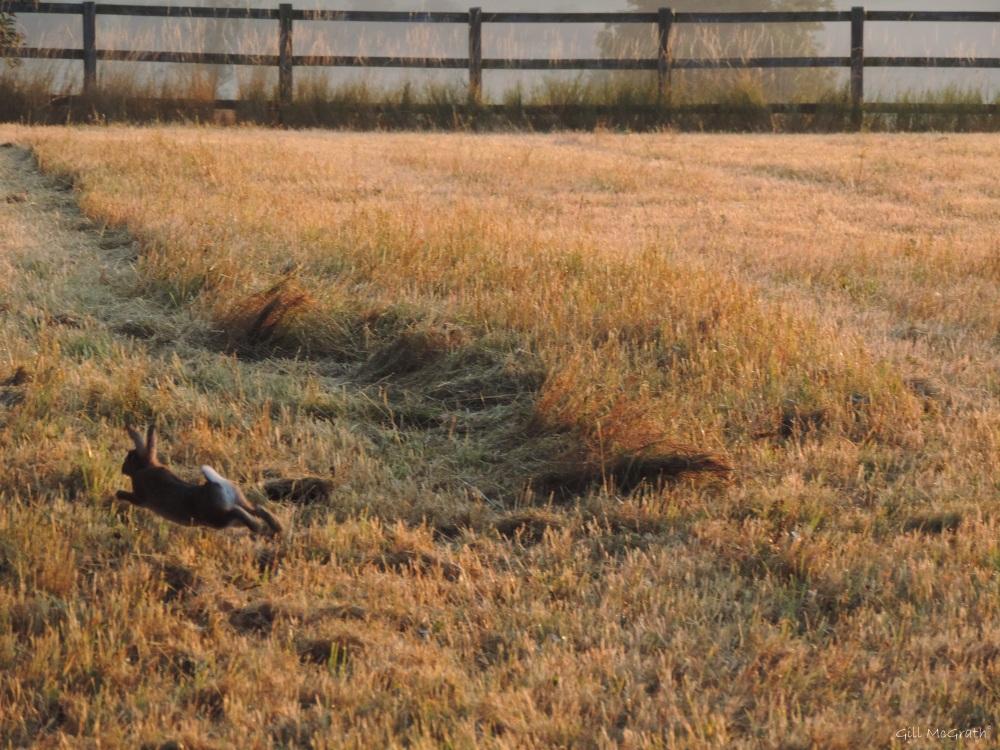 7b  2015 08 03 bunny run DSCN7901 jpg sig