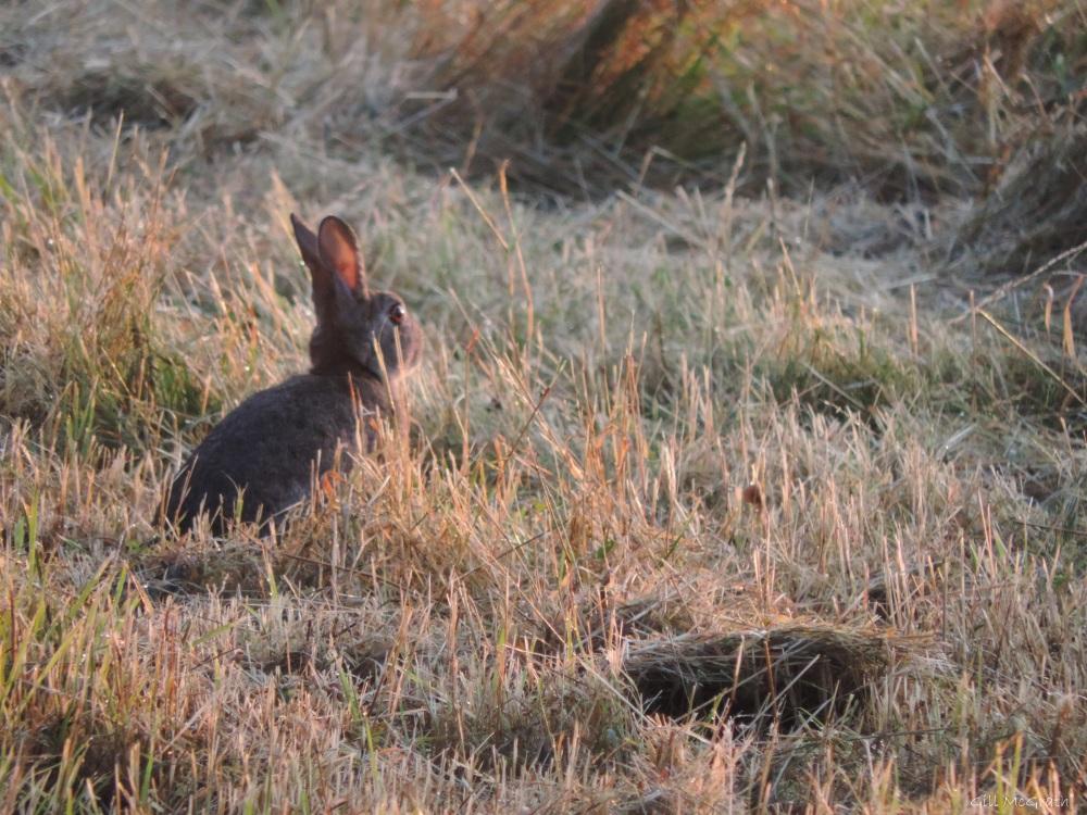 8a 2015 08 02 bunny sit DSCN7907 jpg sig
