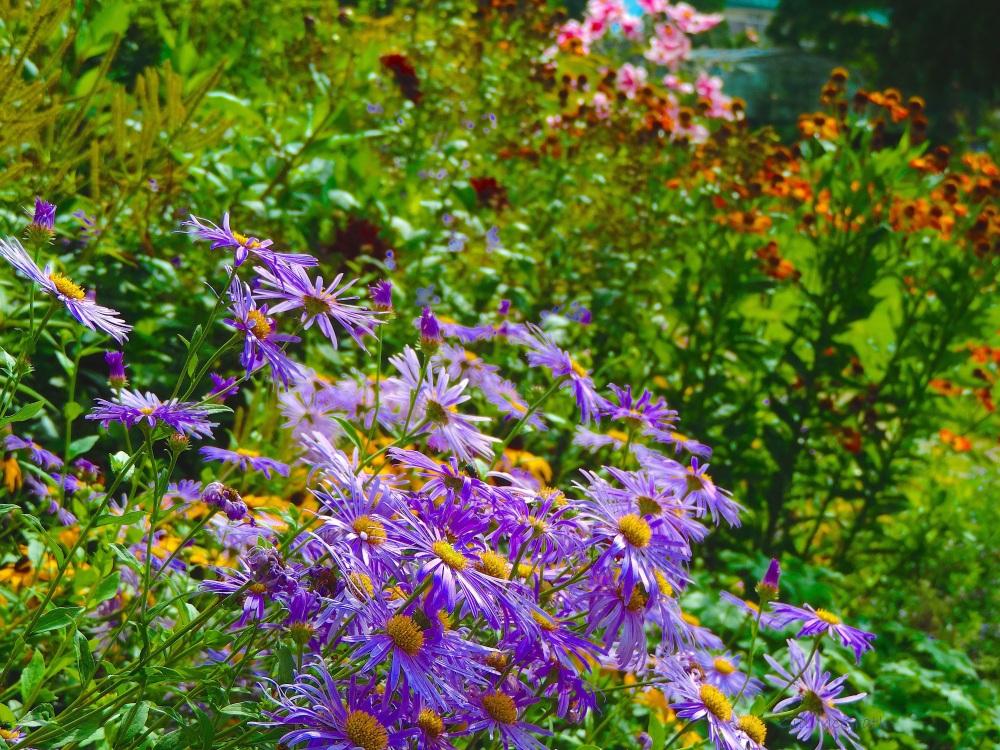2015-09-04 sunny flowers T10_37_16.jpg sig
