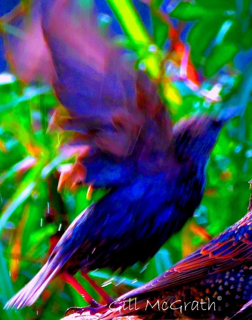 2015 10 11 bird DSCN6950.jpg sig