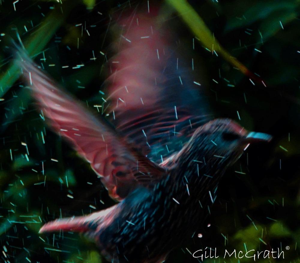 2015 10 11 bird DSCN6966.jpg sig