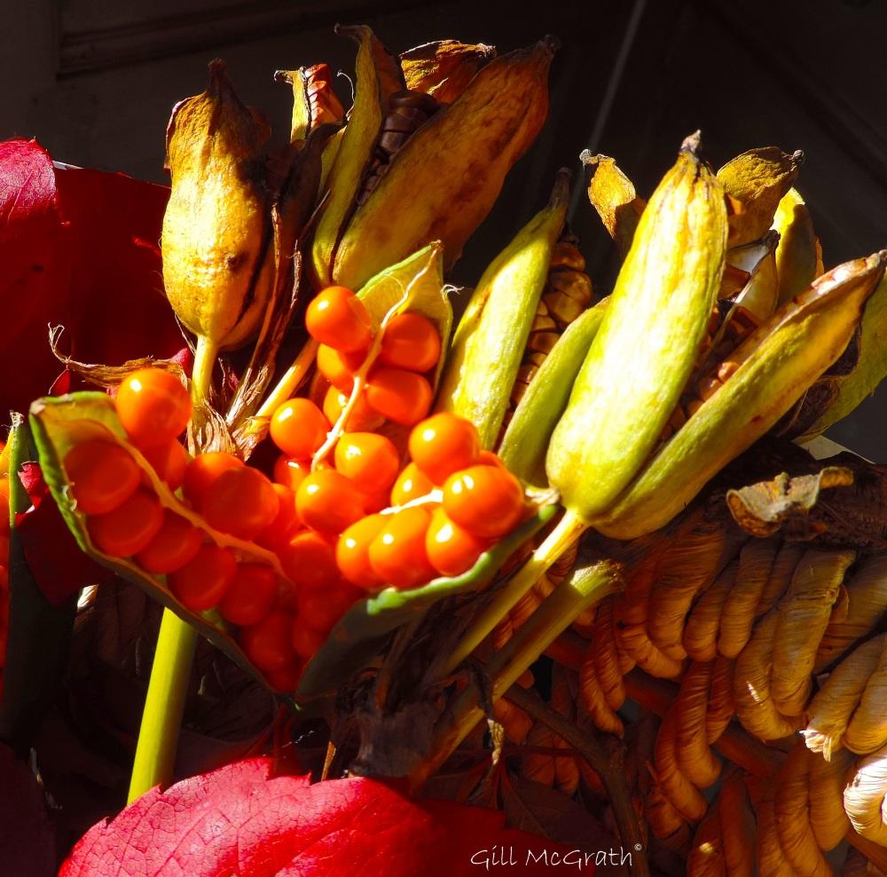 2015 10 14 autumn fruit DSCN7509.jpg sig