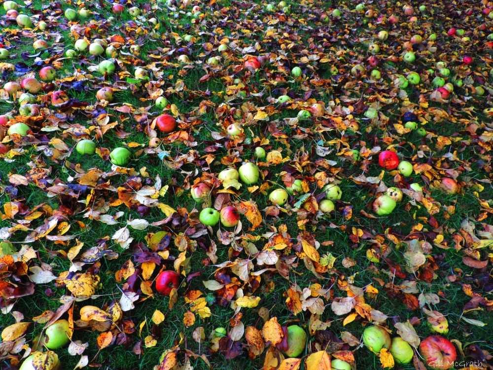 2015 10 30 apples DSCN9074.jpg sig