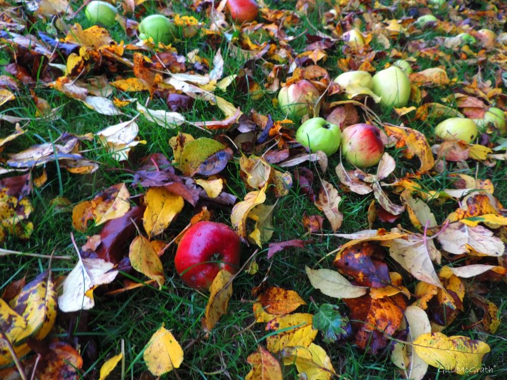 2015 10 30 apples DSCN9075