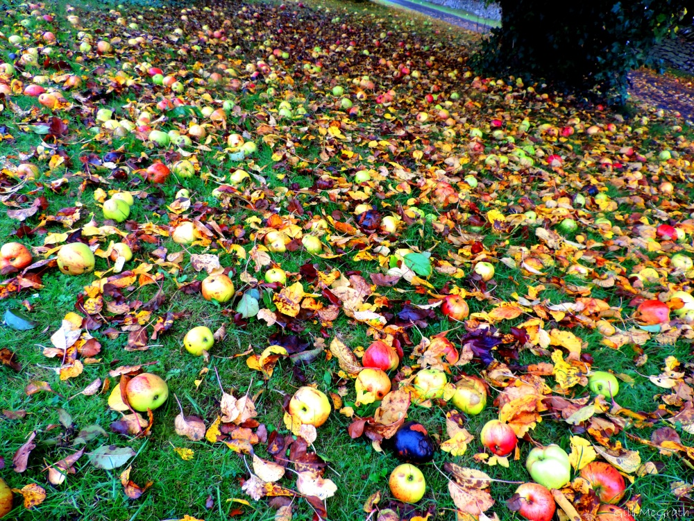 2015 10 30 apples DSCN9082.jpg sig