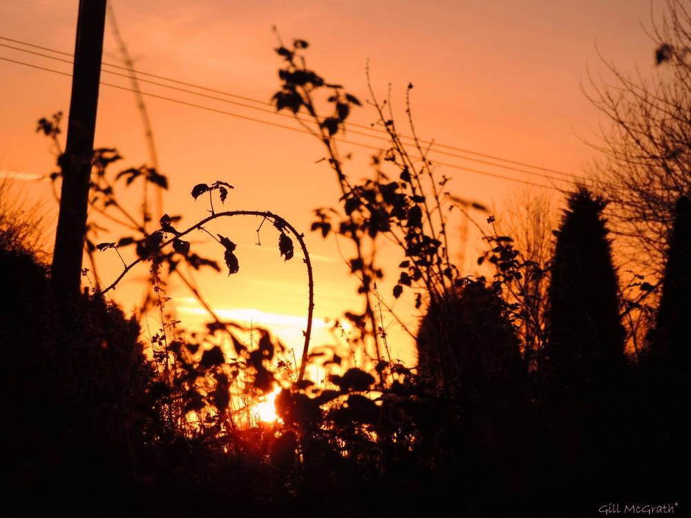 2015 11 28 2 morning jpg sig