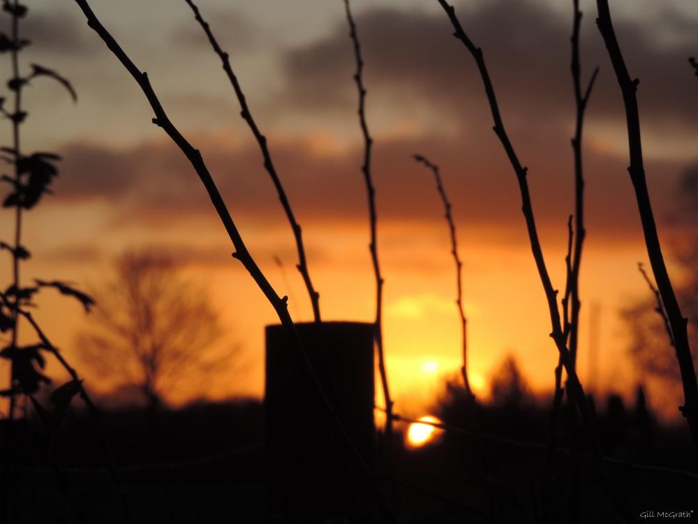 2015 12 04 807 sunrise DSCN1621.jpg sig