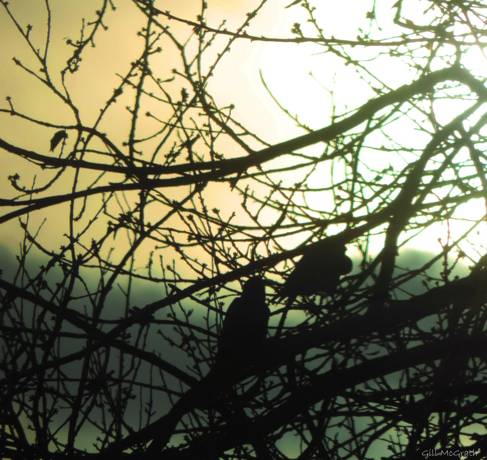2015 12 08 two birds  looking at the sunDSCN1840.jpg sig at 10