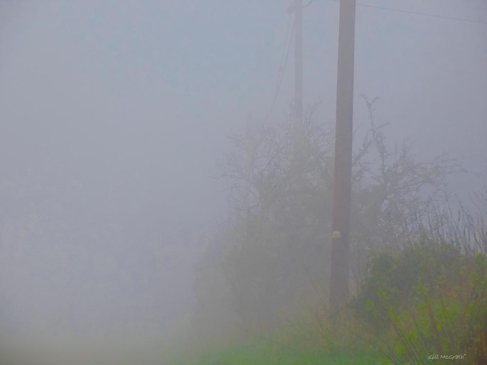 2 2016 01 06 pole in mist DSCN3581.jpg sig
