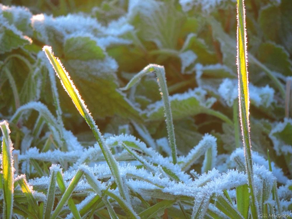 2016 01 20  frost DSCN4350.jpg sig