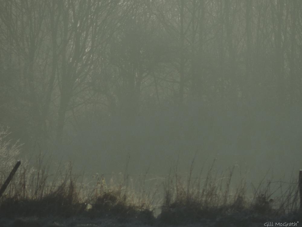2016 01 20 frost DSCN4360.jpg sig