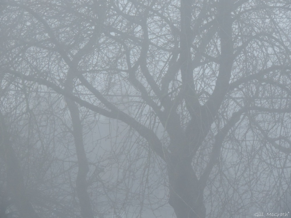 4 2016 01 07 trees DSCN3560.jpg sig
